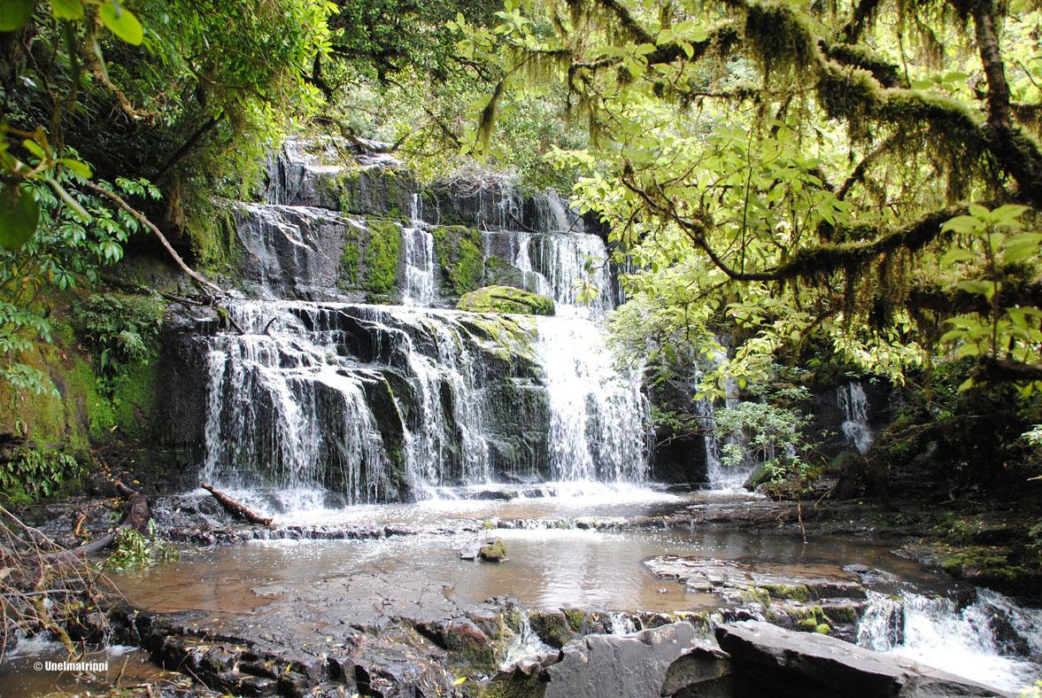Autolla Uudessa-Seelannissa: eläinhetkien etsinnässä Southern Scenic Routella