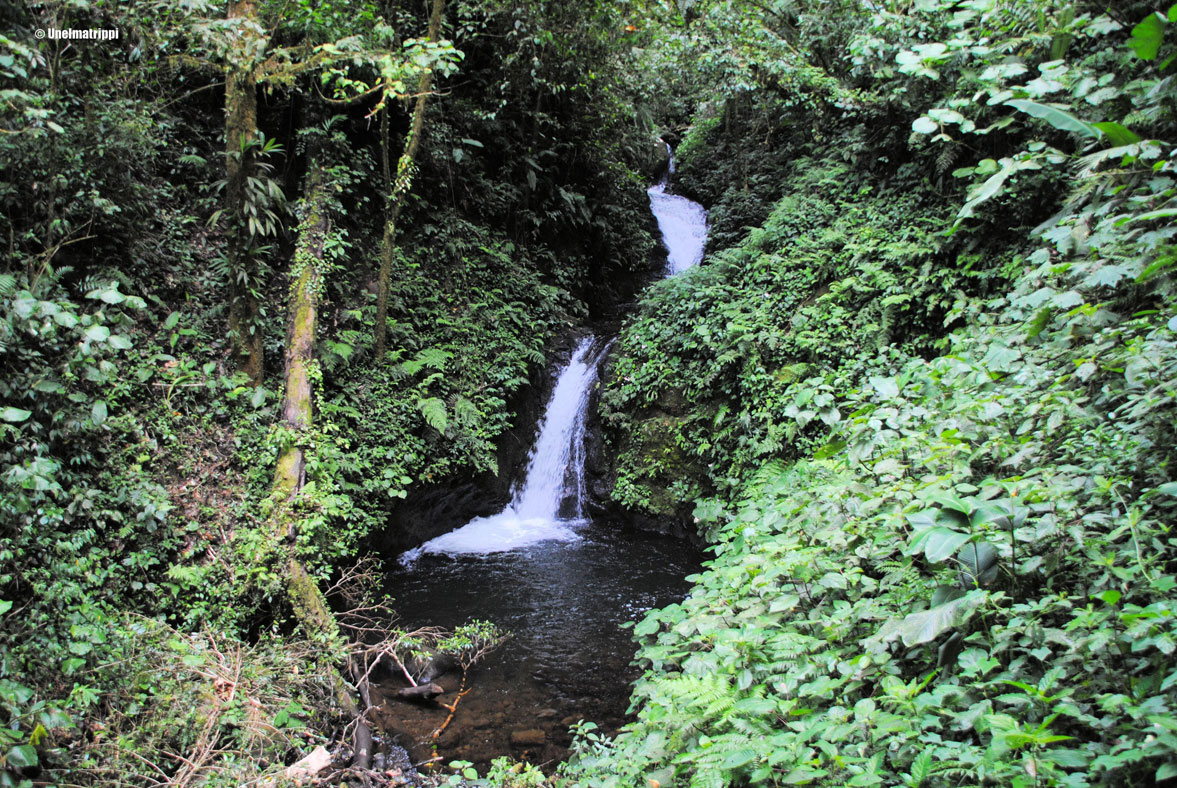 Pilvimetsässä Monteverdessä