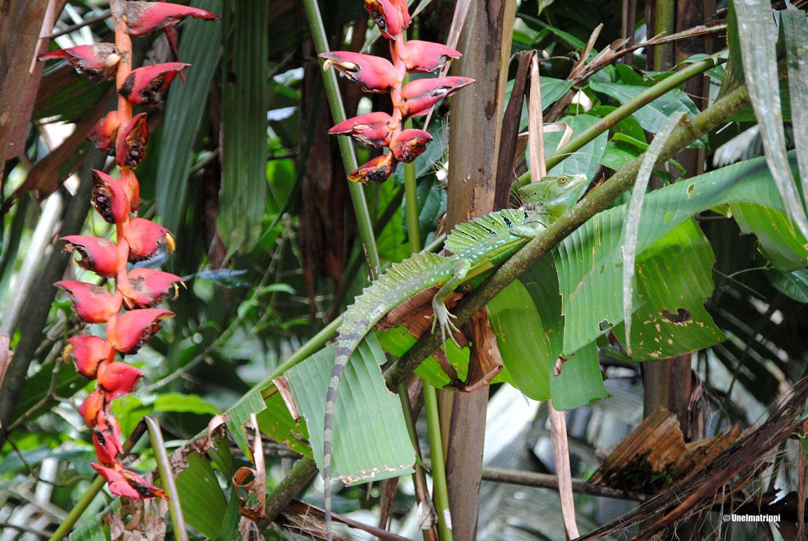 Tortugueron kansallispuisto, Costa Rica
