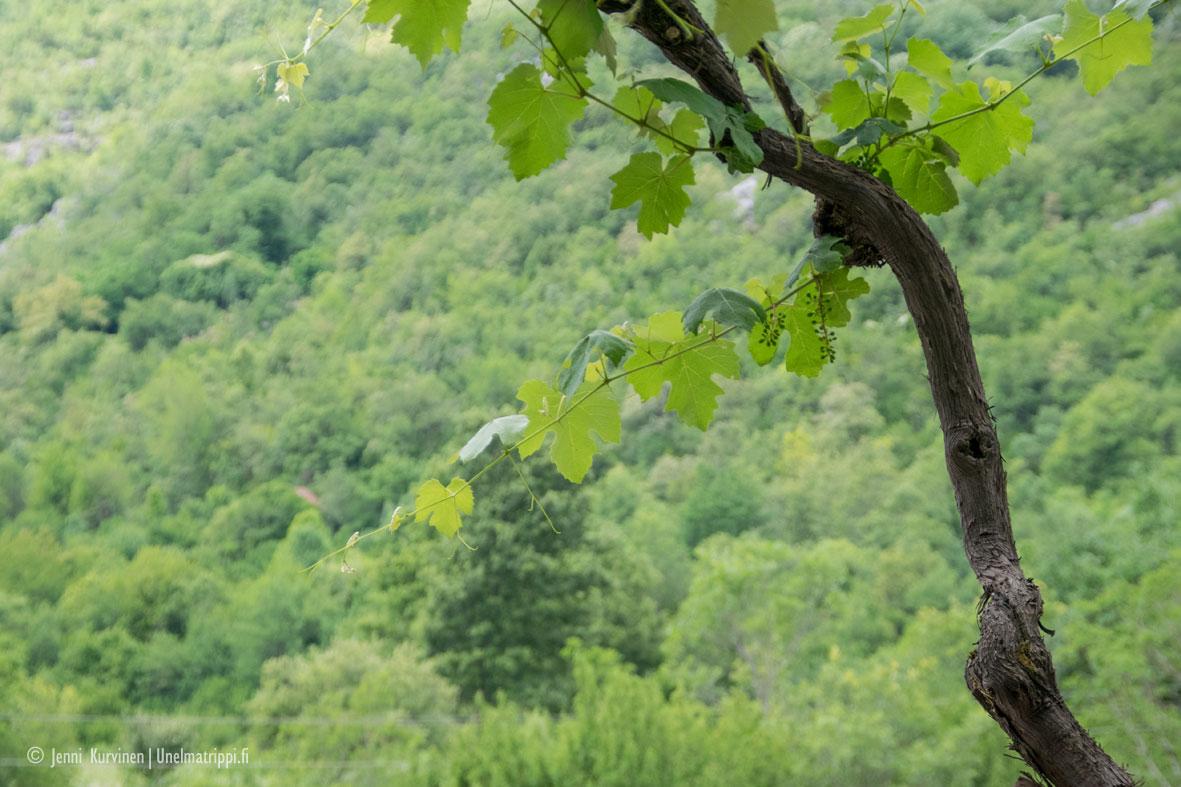 Viininmaistelukierros Montenegrossa
