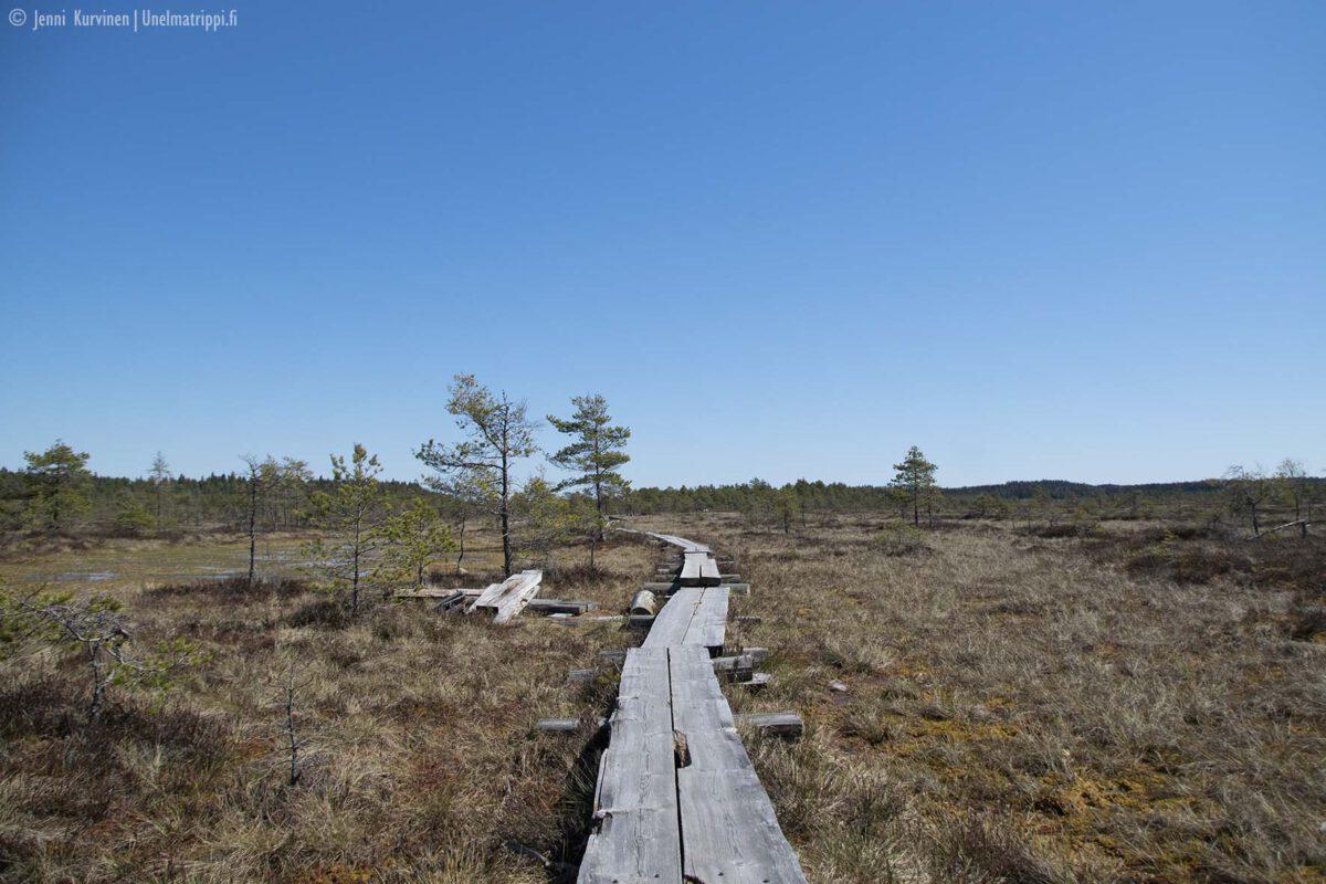 Artikkelikuva Torronsuon kansallispuisto